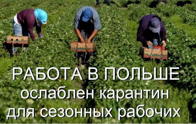 Ослаблен карантин для сезонных рабочих в Польше